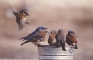 a-bluebird